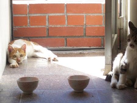 伊豆太陽 ペットBlog