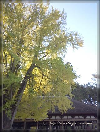 福島県会津若松・喜多方フラワーアレンジ教室 ・プリザーブドフラワー手作りブーケとギフト   スウィートワ