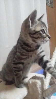 $ほのぼの猫×ハム日記