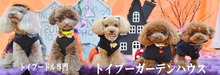 専門ブリーダーのグループ直営ハウスから子犬とペットの便りのブログ