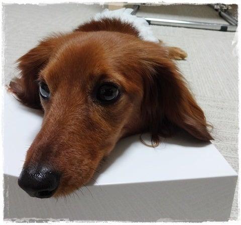 旅犬Lani&Leaのほほん風船記-しつけ教室