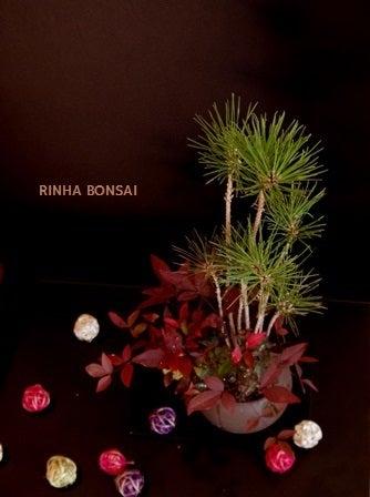 bonsai life      -盆栽のある暮らし- 東京の盆栽教室 琳葉(りんは)盆栽 RINHA BONSAI-琳葉盆栽 お正月飾り