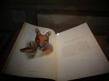 $カンガルー猫 日記