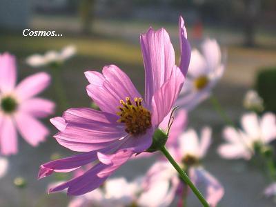花がくれた優しいひととき