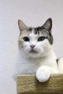 名古屋 猫カフェ ひとやすみな日々