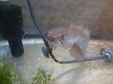 オルナティの熱帯魚