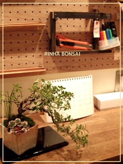 bonsai life      -盆栽のある暮らし- 東京の盆栽教室 琳葉(りんは)盆栽 RINHA BONSAI-琳葉盆栽 針金かけ