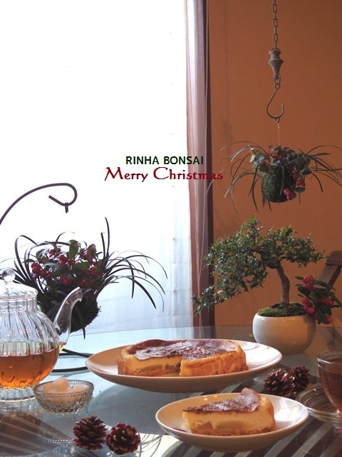 琳葉盆栽 吊るす 苔玉 クリスマス
