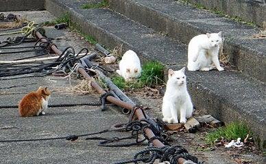 131214 寒釣り場のネコ達