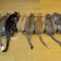 9匹の食事。