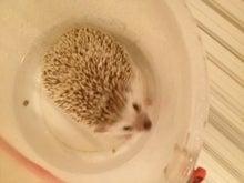 お風呂に入っています