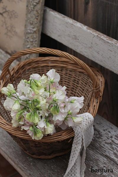 スイトピー 花束 春