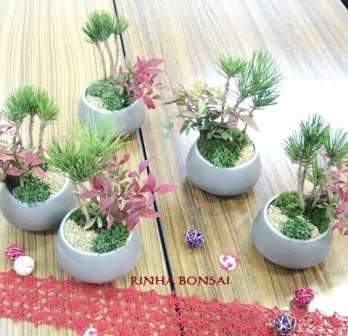 琳葉盆栽 お正月飾り