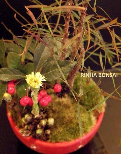 琳葉盆栽 フキタンポポ ヤブコウジ