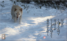 フォト短歌「深雪とロッキー」