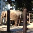 上野動物公園と洗濯機