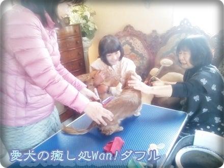 枇杷の葉温灸、犬、ドッグマッサージ、千葉