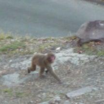 近頃又サルが出ます。