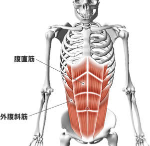 腹筋の筋肉痛 | 世田谷区(三軒茶屋・経堂)、赤羽のパーソナル ...