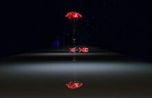 写り込む薔薇
