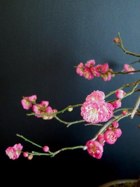 琳葉盆栽 梅