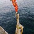 One's fish…