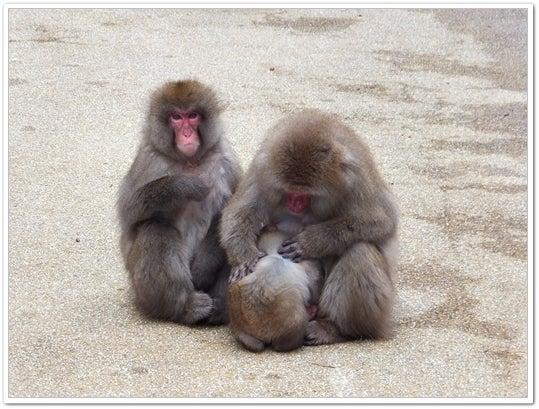 神庭の猿2