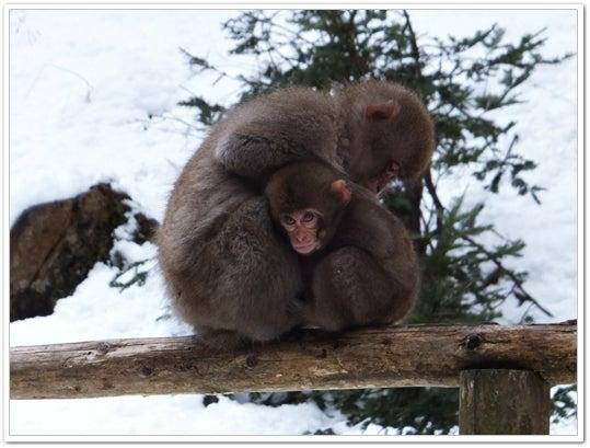 神庭の猿3