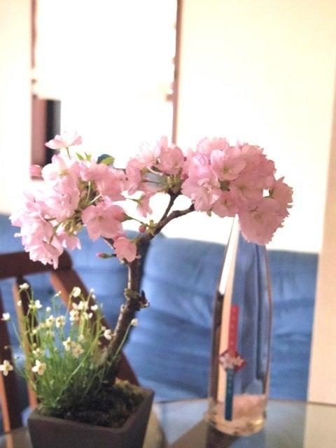 琳葉盆栽 桜 教室