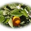 オレンジ 温める 【…