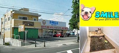 愛知県:ペットのSMILE(シャンアンジェ)
