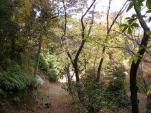 森への路2