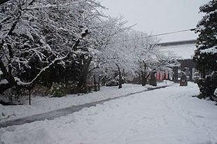 真っ白に雪化粧した参道の様子
