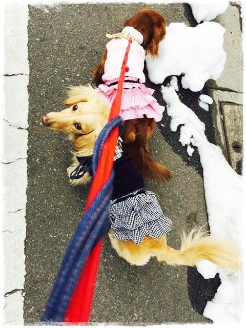 Fifi&Romeo TOKYO