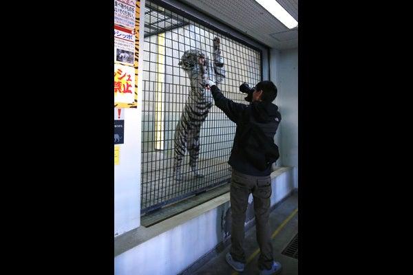 ネコ科動物限定ガイドツアー