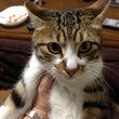 迷い猫「キングちゃん…
