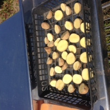 ジャガイモも乾き待ち…