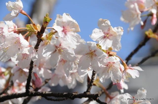 今年最初の春色