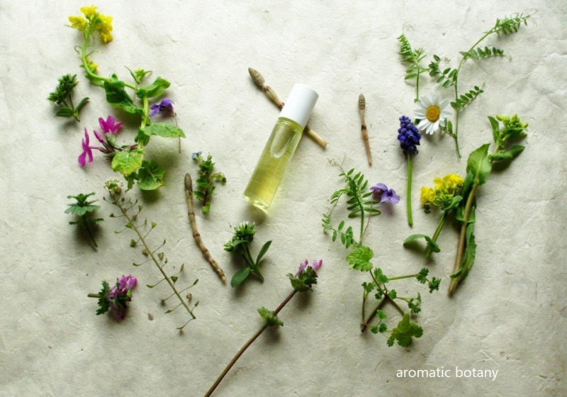 4月12日ワークショップ aromatic botany