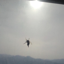 ミツバチがやってきた