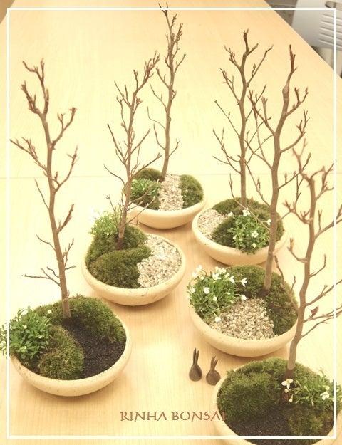 琳葉盆栽 ヒメシャラ