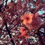 春の足音。