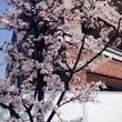 春先取り✳︎