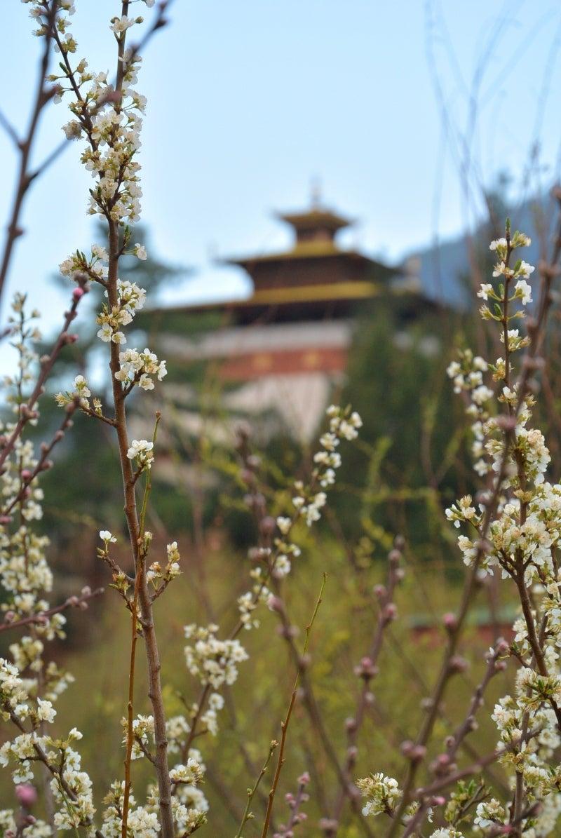 チャンガンカ・ラカンと林檎の花