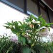 3月の公民館花壇・あ…