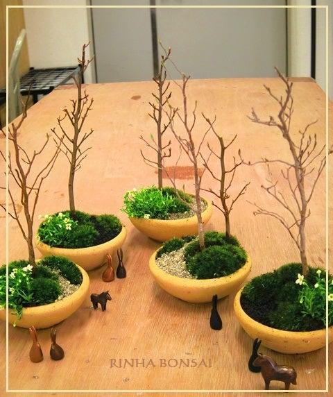 琳葉盆栽 ヒメシャラ 雑木林