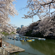 桜満開の新年度開始!