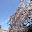 青い空と満開の桜