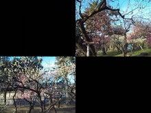 天満宮梅苑_260312.jpg