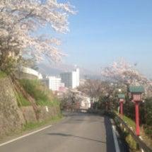 桜の下でウォーク